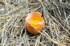 Ovo da galinha quebrado A gema do ovo Front View feno Vista rural Imagem de Stock Royalty Free