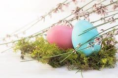 Ovo da páscoa azul e cor-de-rosa em um ninho musgoso com o sutiã de florescência da vassoura Foto de Stock Royalty Free