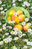 Ovo da páscoa na cesta com flores Foto de Stock Royalty Free