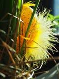 Ovo de Easter amarelo Imagens de Stock