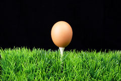 Ovo de Easter no T de golfe Fotografia de Stock
