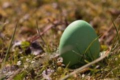 Ovo de Easter verde Imagens de Stock Royalty Free