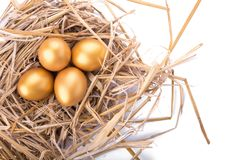Ovo dourado dentro de um ninho isolado no fundo branco Foto de Stock Royalty Free
