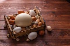 Ovo enorme cercado com ovos pequenos, lugar da avestruz para exprimir Foto de Stock Royalty Free