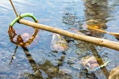 Ovo fervido no thapai-hotspring Imagem de Stock Royalty Free