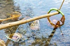 Ovo fervido no thapai-hotspring Imagens de Stock Royalty Free