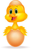 Ovo rachado com desenhos animados bonitos do pássaro para dentro Imagens de Stock Royalty Free