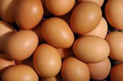 Ovos Imagem de Stock