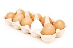 Ovos amarelos e um branco um em um pacote Fotografia de Stock Royalty Free