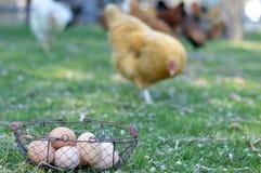 Ovos ar livre da exploração agrícola pequena Fotografia de Stock
