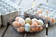 Ovos ar livre recolhidos Fotografia de Stock Royalty Free
