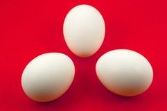 Ovos brancos da árvore no fundo vermelho Imagem de Stock Royalty Free