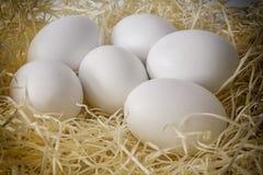 Ovos brancos da galinha do close-up Imagem de Stock Royalty Free