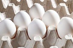 Ovos brancos da galinha em uma gaveta Imagem de Stock Royalty Free