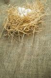 Ovos brancos domésticos orgânicos no ninho da palha Foto de Stock Royalty Free