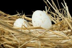 Ovos brancos domésticos orgânicos no ninho da palha Imagem de Stock Royalty Free