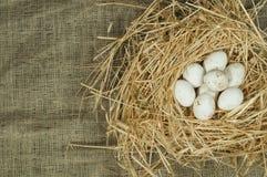 Ovos brancos domésticos orgânicos no ninho da palha Imagens de Stock Royalty Free