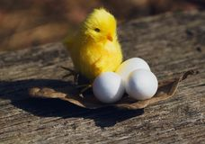 Ovos brancos e galinha da Páscoa decorativa Fotografia de Stock