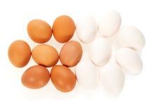 Ovos brancos e marrons Fotografia de Stock