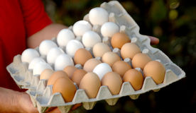 Ovos brancos e marrons da posse da mulher Foto de Stock Royalty Free