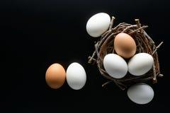 Ovos brancos e marrons em um ninho dos ramos no fundo preto Foto de Stock