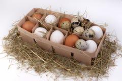 Ovos brancos e marrons na caixa do feno isolada no fundo Fotos de Stock