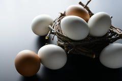 Ovos brancos e marrons no ninho dos ramos no fundo preto Foto de Stock Royalty Free