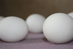 Ovos brancos em um fundo Foto de Stock