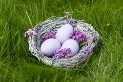 Ovos brancos em um ninho no fundo da grama verde Imagens de Stock Royalty Free
