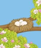 Ovos brancos no ninho fotografia de stock royalty free