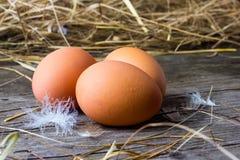 Ovos caseiros da galinha Foto de Stock