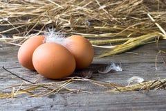 Ovos caseiros da galinha Fotos de Stock