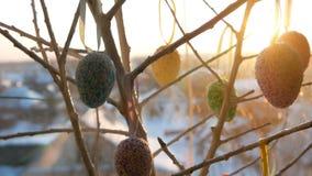 Ovos coloridos da Páscoa nos ramos decorativos brancos Um ramalhete à moda de suportes de ovos da páscoa na soleira nos raios vídeos de arquivo