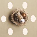 Ovos coloridos em um ninho pequeno Imagem de Stock Royalty Free