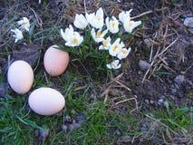 Ovos com açafrão Imagem de Stock