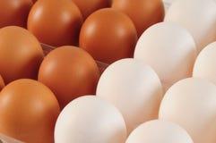 Ovos. Conceito dos trabalhos de equipa Imagem de Stock