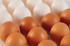 Ovos. Conceito dos trabalhos de equipa Imagens de Stock