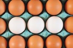 Ovos. Conceito dos trabalhos de equipa Imagens de Stock Royalty Free