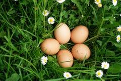 Ovos crescidos orgânicos Fotografia de Stock Royalty Free