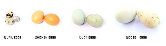 Ovos crus fotografia de stock royalty free
