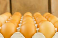 Ovos crus Imagens de Stock Royalty Free