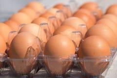 Ovos crus da galinha na caixa de ovo Imagens de Stock Royalty Free