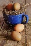 Ovos da exploração agrícola no copo azul com palha Fotos de Stock