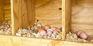 Ovos da galinha Fotografia de Stock Royalty Free