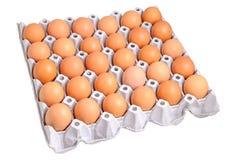 Ovos da galinha Foto de Stock