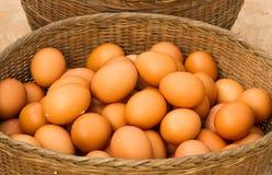 Ovos da galinha imagens de stock royalty free