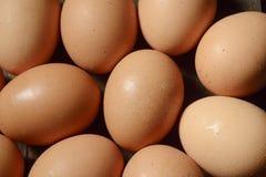 Ovos da galinha Fotografia de Stock