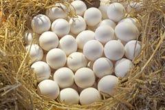Ovos da galinha Fotos de Stock Royalty Free
