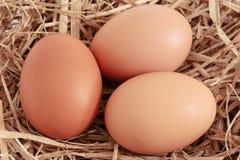 Ovos da galinha de Brown Imagem de Stock Royalty Free