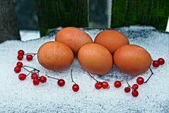Ovos da galinha e bagas do Viburnum na neve fotografia de stock